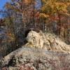 Mitchell Ridge Forest Tour 15