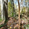 Mitchell Ridge Forest Tour 16
