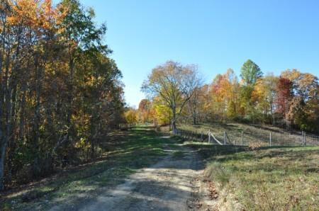 Mitchell Ridge Forest Tour 17