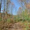 Mitchell Ridge Forest Tour 19