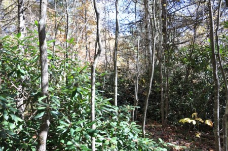 Mitchell Ridge Forest Tour 21