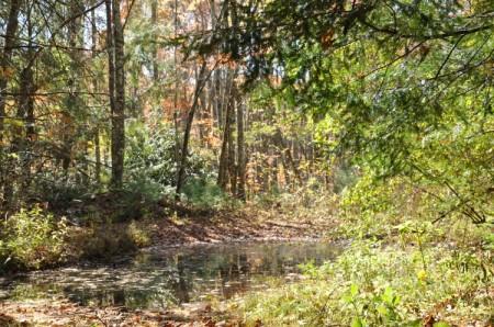 Mitchell Ridge Forest Tour 22
