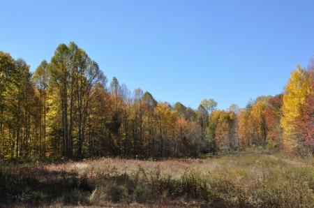 Mitchell Ridge Forest Tour 24
