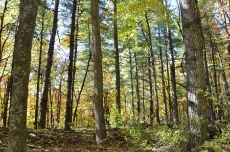 Mitchell Ridge Forest Tour 25