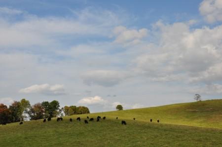 Chapel Ridge Farm Tour 13