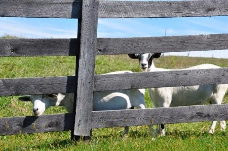 Chapel Ridge Farm Tour 23