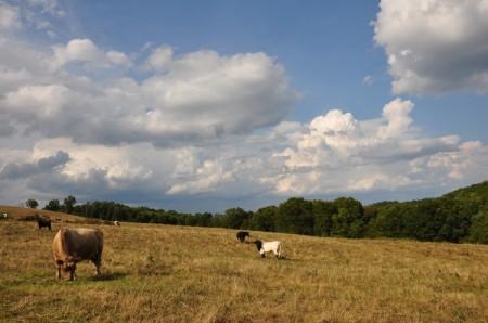 Totten Farm on River Rd Tour 03