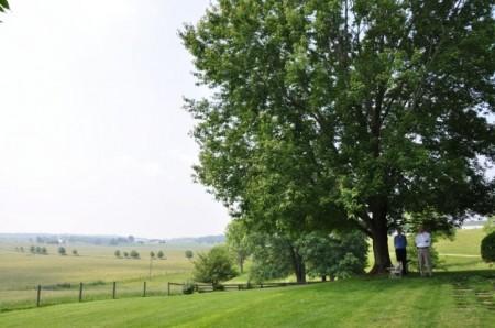 Big Oak 4