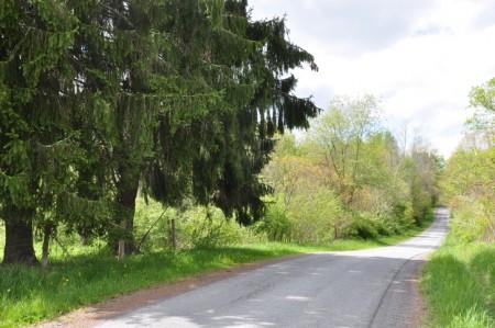 Birchfield Spring 01