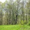 Birchfield Spring 02