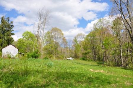 Birchfield Spring 04