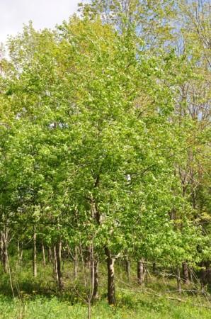 Birchfield Spring 05