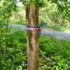 Birchfield Spring 08