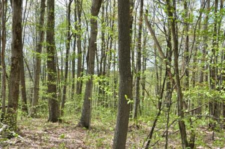 Birchfield Spring 15