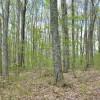 Birchfield Spring 16