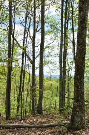 Birchfield Spring 17