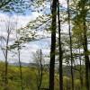 Birchfield Spring 18