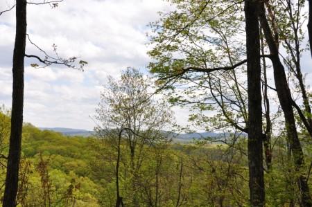 Birchfield Spring 19