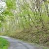 Birchfield Spring 27