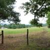 Mountaintop Meadow Tour 15