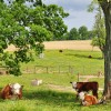 Grandview Farm Tour 14