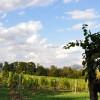 Looking west across the vineyard.