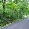 Grimmett Forest Tour 01