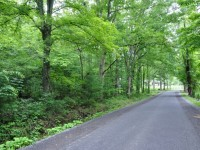 GRIMMETT FOREST<br />50 +/- ACRES
