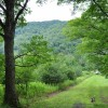 Grimmett Forest Tour 02