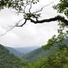 Grimmett Forest Tour 03