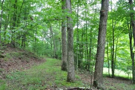 Grimmett Forest Tour 05