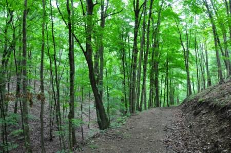 Grimmett Forest Tour 07