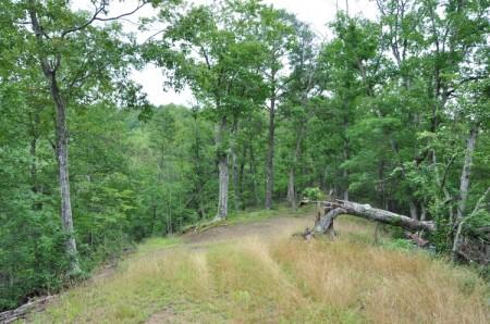 Grimmett Forest Tour 09