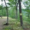 Grimmett Forest Tour 11