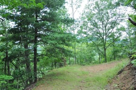 Grimmett Forest Tour 13