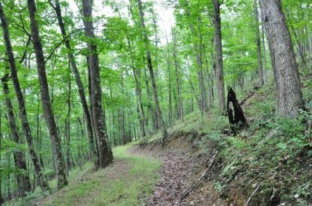 Grimmett Forest Tour 14