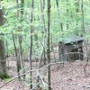 Grimmett Forest Tour 16