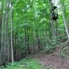 Grimmett Forest Tour 17