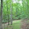 Grimmett Forest Tour 20