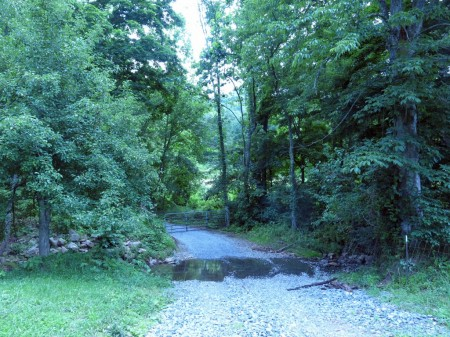 Lick Creek Forest-001