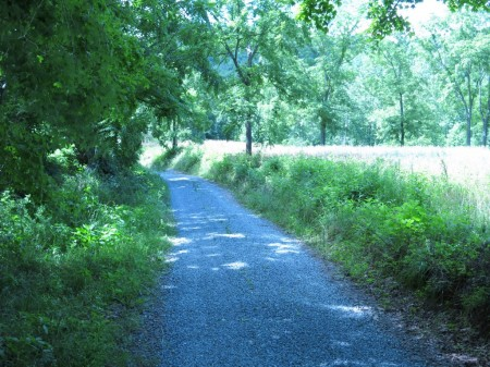 Lick Creek Forest-002
