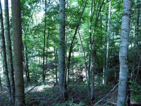 Lick Creek Forest-003