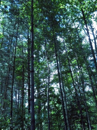 Lick Creek Forest-004