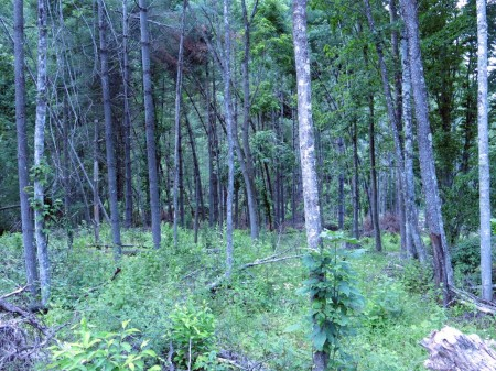 Lick Creek Forest-007