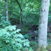 Lick Creek Forest-008