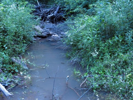Lick Creek Forest-009