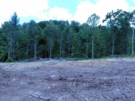 Lick Creek Forest-010