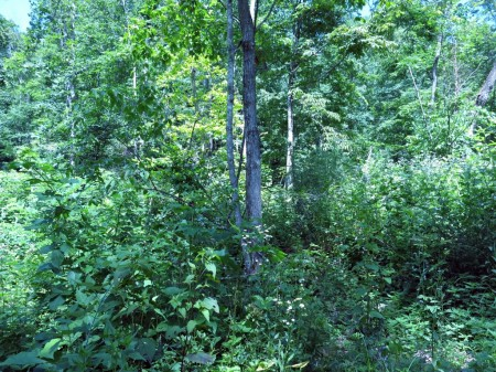 Lick Creek Forest-011