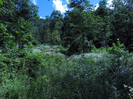 Lick Creek Forest-012