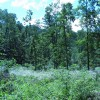 Lick Creek Forest-013